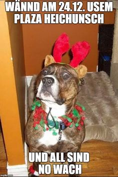 An image tagged christmas truth dog Animal Activities, Preschool Activities, Animal Quotes, Animal Memes, Animals And Pets, Funny Animals, Animal Tattoos For Men, Wildstyle, Mandala Drawing
