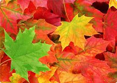 Resultado de imagem para imagens de folhas de outono
