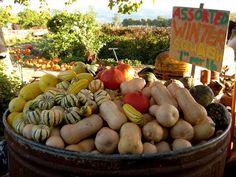 Summerset Farm, Santa Ynez Valley, CA