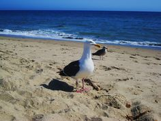 Some friendly seagulls I met in Malibu. They enjoyed my lunch from Subway