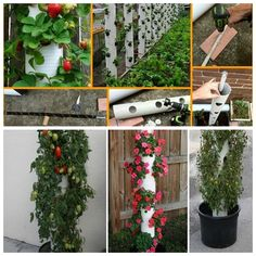 Wonderful DIY Vertical PVC Planter   WonderfulDIY.com