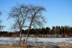 Kaukon kalalanssi Pohjankylä Pyhäjoki