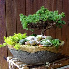 """Garden Design Ideas   two-color hypertufa planter   """"...if you don't like gray, liquid or powdered cement color can be added to the wet mix to make an even more interesting design."""""""
