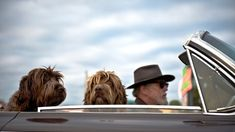 Las ciudades más amigables para viajar con perros April 05 2018 at 01:18PM   Las ciudades más amigables para viajar con perros  Míralo aquí con todas las imágenes: http://lealesorg.blogspot.com/2018/04/las-ciudades-mas-amigables-para-viajar.html #Difunde en #LealesOrg y #adopta para #AdoptaNoCompres O un #SeBusca de #perro o #gatos; #perdido o #encontrado Pronto llega el verano y hay que elegir el destino para las vacaciones. Cuando se tiene una mascota es una decisión muy importante si se…