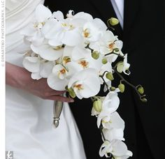 want this bouquet at my wedding orchids are SO pretty! White Wedding Flowers, Bridal Flowers, White Flowers, Bride Bouquets, Floral Bouquets, Bouquet Flowers, White Orchid Bouquet, White Orchids, August Wedding