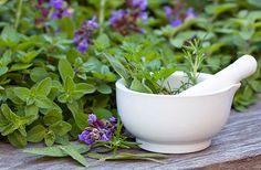 Herb Garden Plants – Spice Up Your Food, Your Health, and Your Life Healing Herbs, Medicinal Herbs, Herb Garden, Garden Plants, Garden Spaces, Compost, Ayurveda, Herb Seeds, Garden Theme