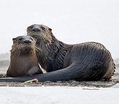 100 Best Arkansas Wildlife Images On Pinterest Beautiful