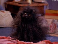 salem from sabrina the teenage witch | Sabrina The Teenage Witch' Is The Newest Superhero (Plus .Gif Gallery ...