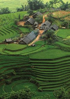 Sapa, Vietnam- I need to go back to Vietnam. I can skip the south but I must get to experience Sapa and must not miss Hue this time.