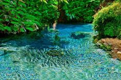 The Blue Spring, New Zealand.