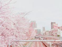 cherry blossom, city, japan, pink, pretty, romantic, sakura, tokyo, tree