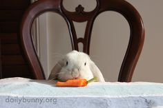 Bunny runs off with a carrot - August 26, 2014 - More at today's Daily Bunny post: http://dailybunny.org/2014/08/26/bunny-runs-off-with-a-carrot/ !