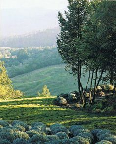 St. Helena hills