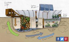 Esta familia decidió cultivar en la mitad del desierto y convirtieron la piscina en una huerta