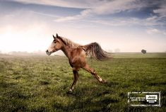 Jeep: Horse | Ads of the World™