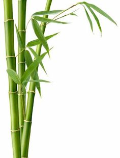 Super interesting Feng Shui article talking about what elements you might be lacking or have too much of in your home. Very helpful! Black And White Art Drawing, Bamboo Background, How To Feng Shui Your Home, Bamboo Art, Bamboo Leaves, Fifth Element, Art Corner, Life Problems, Stock Foto