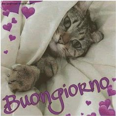 Good Morning Good Night, Good Morning Quotes, Italian Memes, Foto E Video, Animals And Pets, Best Friends, Instagram, Genere, Snoopy