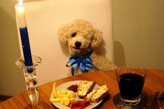 Finnish Independece Day 6.12 Poodle having appetizers <3