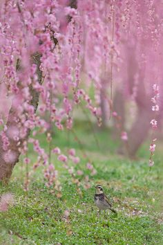Under the tree of plum blossom by AI  OGISO on 500px