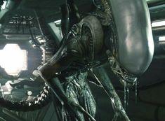 Alien Vs Predator, Giger Alien, Arte Alien, Alien Isolation, Alien Covenant, Alien Design, Aliens Movie, Sci Fi Horror, Funny Cat Videos
