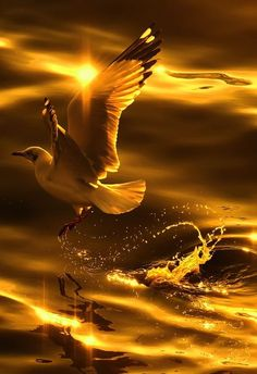 Sunrise flight in gold