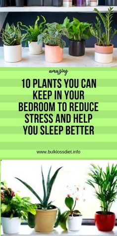 10 Plants You Can Keep In Your Bedroom to Reduce Stress and Help You Sleep Better - Bulk Loss Diet Colon Health, Health Diet, Adrenal Health, Health Facts, Health And Fitness Expo, Wellness Fitness, Health And Wellness, Diet Drinks, Healthy Drinks