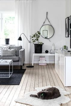 White Walls | Grey Kitty on White Fur rug | Grey Sofa | Hanging Circular Mirror |