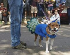 Belle Mead Animal Hospital sponsors Pet Masquerade Parade! Read all about it!