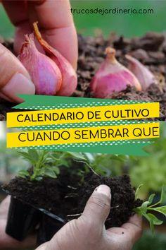 Exceptional Growing vegetables tips are offered on our internet site. Eco Garden, Garden Planters, Growing Plants, Growing Vegetables, My Secret Garden, Garden Spaces, Back Gardens, Garden Projects, Vegetable Garden