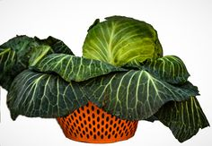 11 Amazing Health Benefits of Cabbage