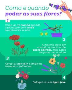 Siga essas dicas e a suas flores vão ficar mais radiantes que nunca 💐🌺🌹🌻 #DicasHH #plantas #flores #dicas Home Health, Discovery, Gardening, Tips, Floral Arrangements, Sustainability, Routine, Garden, Flowers