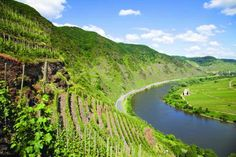 One of Germany's most famous vineyard sites, a dizzyingly steep slope called Sonnenuhr along the Mosel River.