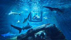 Snoozing with the Sharks: Inside Airbnb's First Aquatic Accommodation - Forbes
