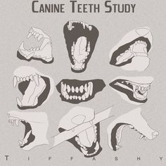 Wolf/Canine Teeth Study by TIFFASHY on DeviantArt