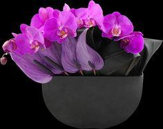 Fuchsia Rhapsody | Winston Flowers