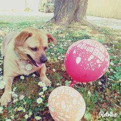 Lutfballon, mydog,