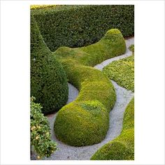 GAP Photos - Garden & Plant Picture Library - Snake shaped Buxus topiary and gravel paths - GAP Photos - Specialising in horticultural photography