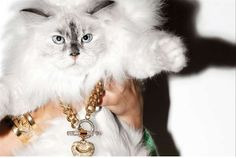 Dazzling Cat Modeling Campaigns