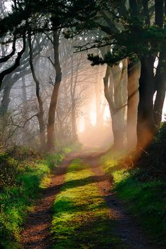 beautiful!  forest footpath in Cornwall, sunlight and shadow