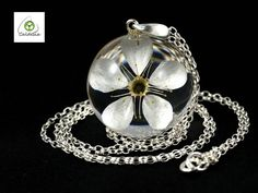 Pendant with natural flower of damson plum Prunus sp. in the
