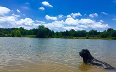 One of the best things about living in Memphis... Shelby Farms Dog Park!
