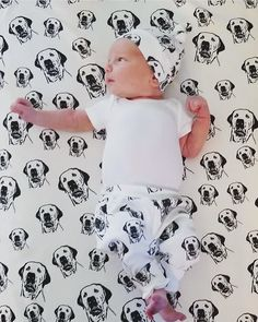 3,548 Followers, 7,125 Following, 2,148 Posts - See Instagram photos and videos from dogs+babies+good vibes (@monofaces) Plush Baby Blankets, Your Brother, Personalised Gifts, Newborn Gifts, Baby Dogs, Cool Baby Stuff, Good Vibes, Followers, Labrador