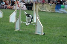 jump jump jump ... I will always jump..