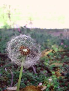 I took this picture a few months ago, but after looking back and zooming in, I noticed the great detail in the dandelion. I also really like the fact the you can see through it, yet the whiteness of it is still contrasted against the background - A. McIntyre