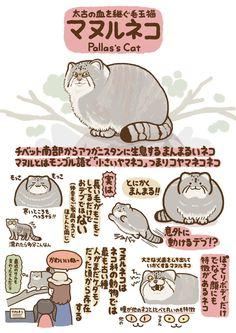 埋め込み画像 Pretty Animals, Pretty Cats, Cute Cats, Cute Animals, Pallas's Cat, Animal Graphic, Weird Creatures, Cute Anime Character, Street Art