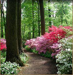 gardens at Winterthur, Delaware