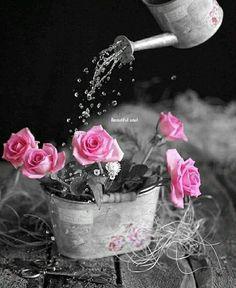Regando rosas 🌹🌷🌹🌷🌹🌷