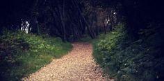 Chemin#Choix#Destiné#Arbres#Bisard#Arbres