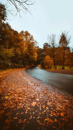 Autumn Cozy, Autumn Lake, Dark Autumn, Autumn Scenes, Fall Pictures, Fall Pics, Fall Images, Autumn Aesthetic, Fall Wallpaper