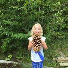 Coulter Pine Cone  the heaviest cones in the world  brought to you by Erika the strong#treestalk #instatree #planttrees